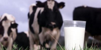 Por la crisis, cada vez hay más empresas lecheras que cierran sus puertas