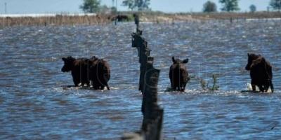 Declaran la emergencia agropecuaria en General Villegas