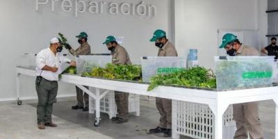 Inauguraron un complejo de biotecnología para la producción de cannabis medicinal